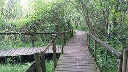 Parco Palude di Onara