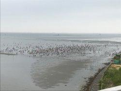 Kisarazu Coast Shiohigari