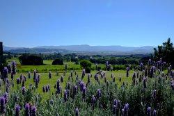 Mountain Ridge Wines - Winery, Restaurant, Art Gallery