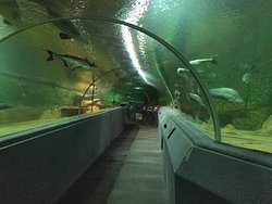 清迈动物园水族馆