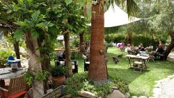 Orgiva Tea Garden