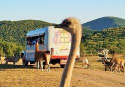 Antelope Park Safari Ranch