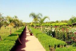 Le Paradis du Safran