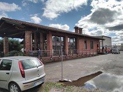 Sale in Zucca - Vivai Gariglio