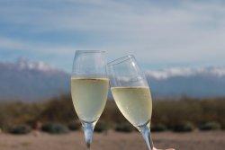Vendimia Wine Tours