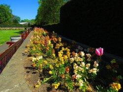 Saughton Park and Gardens