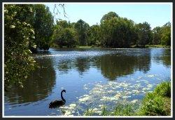 Baldwin Swamp Environment Park