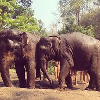Hug Elephant Sanctuary