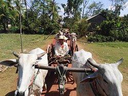 Ox Cart Adventure Tours