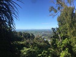 Hakarimata Kauri Grove