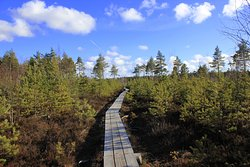Nature Study Trail in Paaskula Bog
