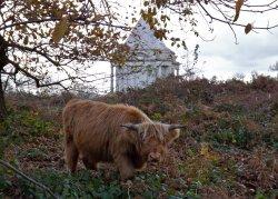 Cobham Wood and Mausoleum