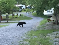 """Best kept """"Camping / Glamping"""" secret in the Smoky Mountains"""