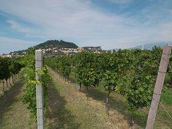 Tacchetto, cru vineyard in Cavaion