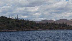 Saguaros on island in Lake Pleasant