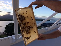 Collecting our own honey, sustainability Planet 21 AccorHotels