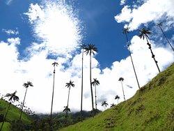 Colombia Bilingual Tours