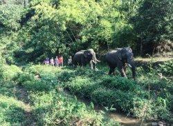 Elephant Peace Travel