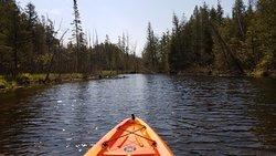 Kayak the Logan Creek wetlands