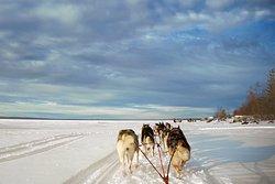 Nordic Husky Tour