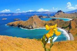 Sachi Tours & Travel