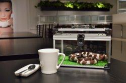 - cafe & snake - Tokyo Snake Center