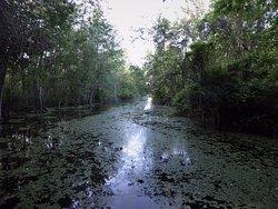 Flat Island Preserve