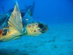 Fuerte Divers