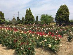 RSK Bara Garden