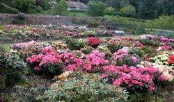 Glendoick Gardens