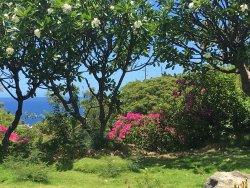 Pua Mau Place Arboretum & Botanical Garden