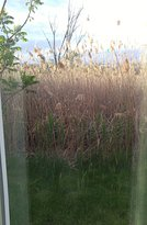 this was the beautiful view from our room. beyond the tall grass was a splendid view of the high