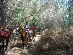 Western Trails Horseback Riding - Private Rides