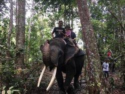 Minas Elephant Training Centre