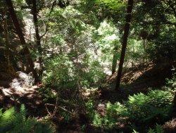 明王堂に至る参道の片側は深い、急な谷底です