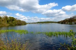 Frensham Great Pond & Common