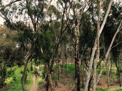 Hosp Grove Trails