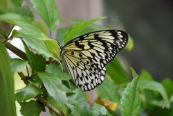 The Butterfly Farm (La Ferme des Papillons)