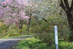 Furushiroyama Castle Ruins (Furushiroyama Park)