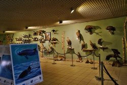 Natural History Museum of Wolin National Park