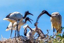 Leidam Bird Sanctuary
