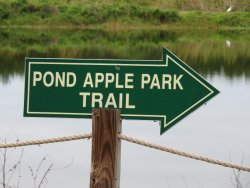 Pond Apple Park