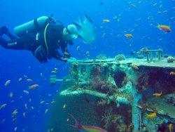 Shulamit's Eilat Diving Adventures