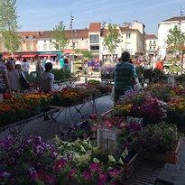Marche Saint Roch