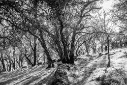 Sonoma Overlook Trail