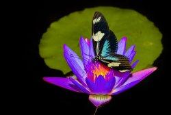 Vlindertuin de Kas Zutphen