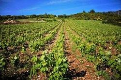 Siflogo Winery