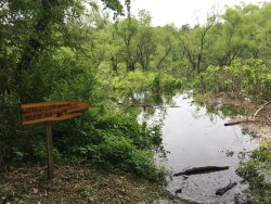 Murphy River Walk