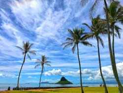 Aloha Turtle Tours