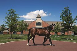 Godolphin at Jonabell Farm, home of the Darley stallions
